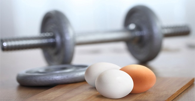 función estructural de los nutrientes