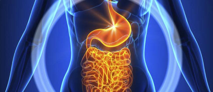 regulación del sistema digestivo